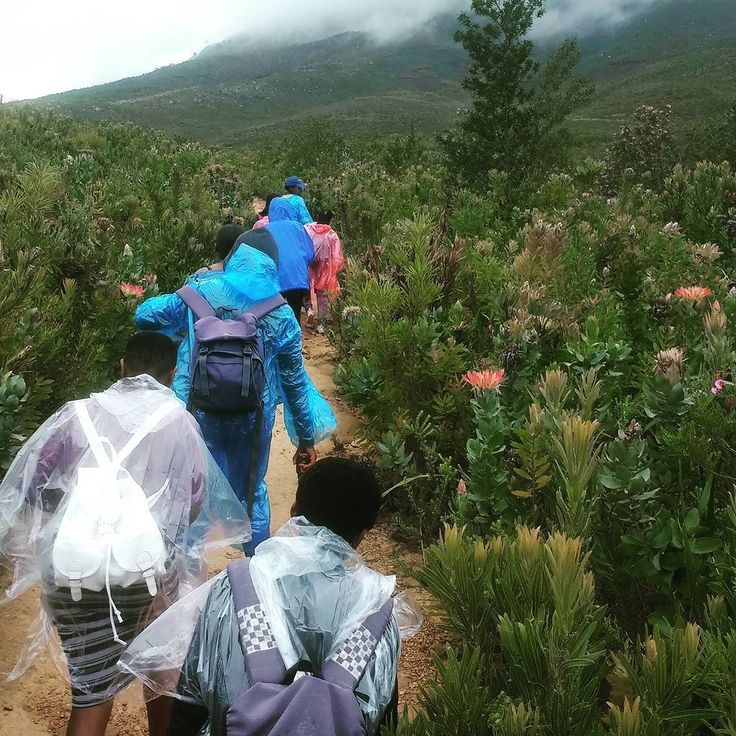 Grade 8s mountains fynbos and a pinch of rain--a recipe for a great Saturday in South Africa's Cape Floristic Region. #fynbos #citizenscience