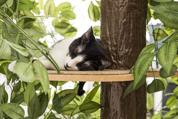This unique patented product, designed and assembled in the USA, is the only one in the market that allows your feline friend to experience the fun of climbing, stretching, scratching, hiding or simply napping on a tree. Since cats love to experience different materials and textures, each