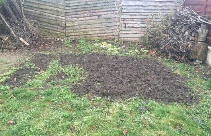 În fundul grădinii vom planta un copac