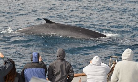 Three-hour tours include narration by a marine naturalist, snack bar, and indoor and outdoor seating for 149
