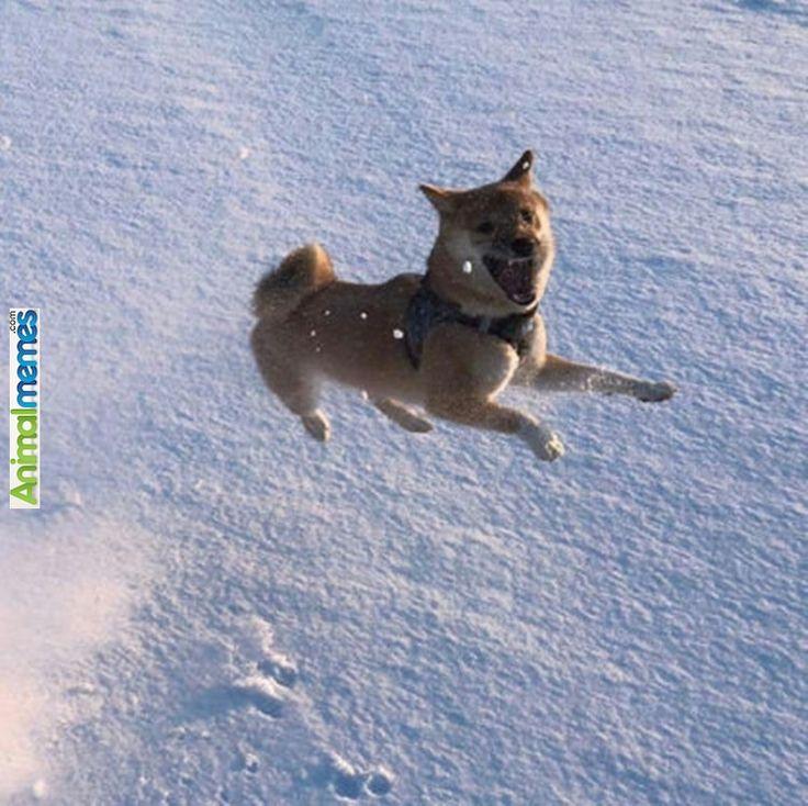 #humor #fun #meme #animals #cats #dogs #funny | Animal ... |Flying Dog Meme