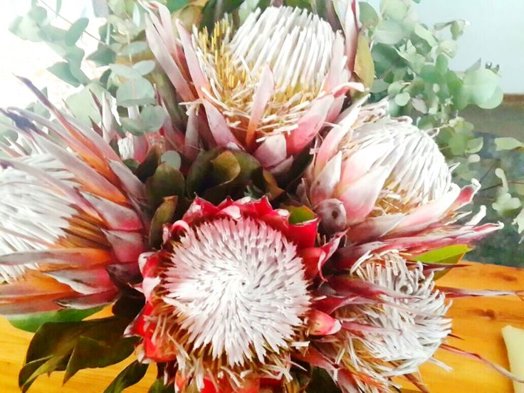My bouquet of proteas
