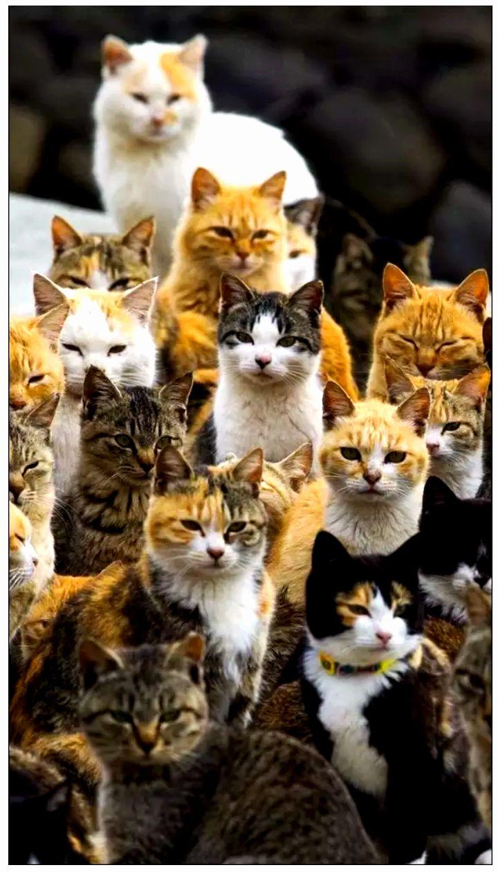 Familia Numerosa : )