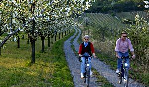 Freizeit & Kultur - Radfahren - Purbach am Neusiedlersee, Burgenland…