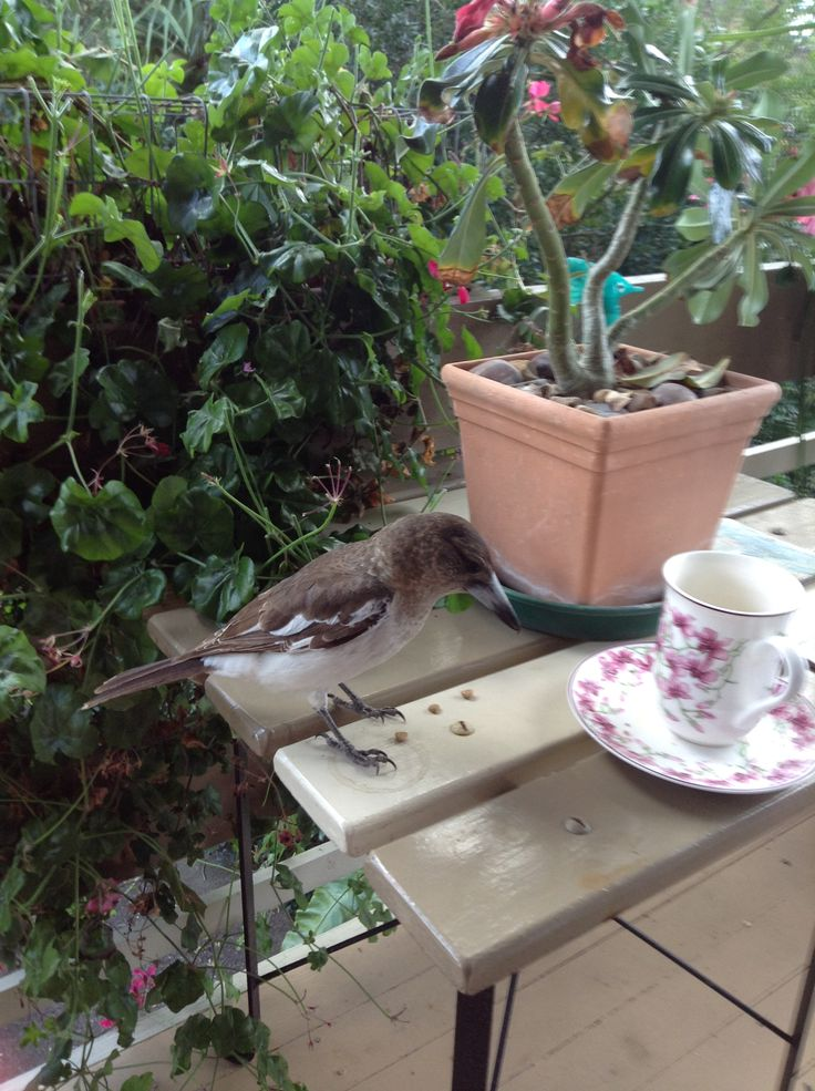 A cheeky visitor came to join me for my morning coffee on the porch