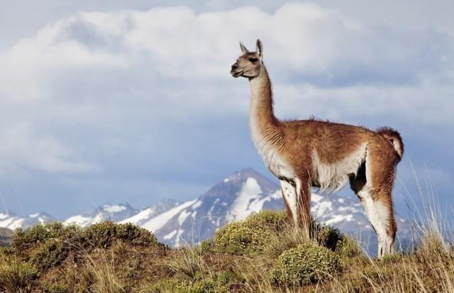 Dos nuevos parques nacionales en Argentina Parque Nacional Patagonia