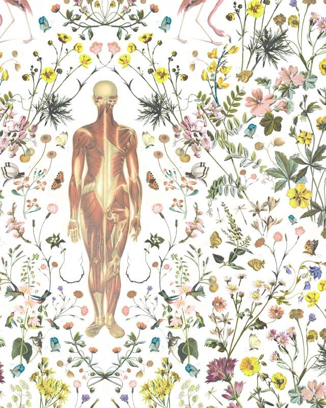 Anatomical flowery wallpaper by Jonny Macali   http://jonnymacali.com/Human-in-Nature-Special-Wallpaper