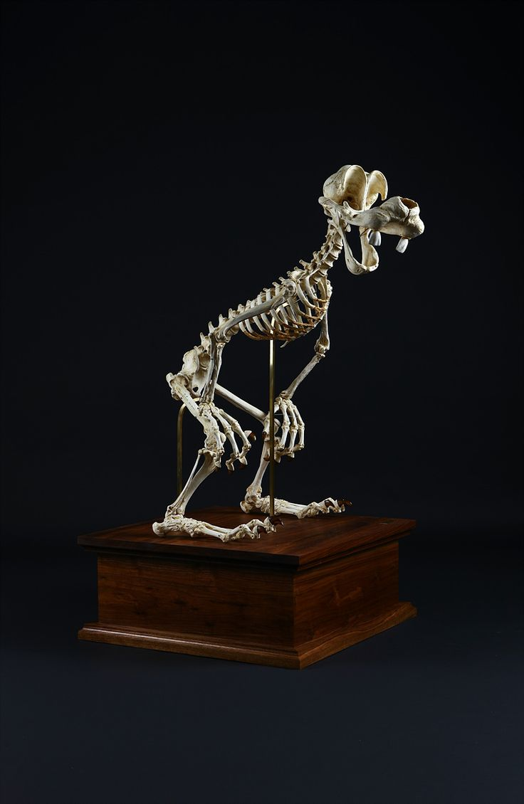 This Is What The Skeletons Of Goofy - Famous Cartoon Characters Would Look Like | IFLScience