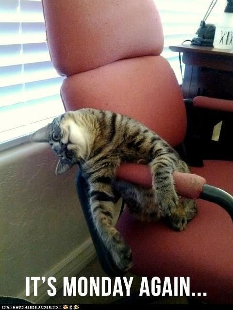 Google Image Result for http://icanhascheezburger.files.wordpress.com/2012/04/funny-pictures-i-know-those-feels-monday-cat1.jpg