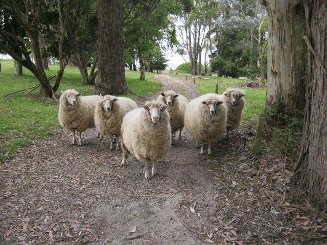 Holiday in Tasmania, in beautiful Burnie. #tasmania #holidays #travel http://www.ozehols.com.au/blog/tasmania/holiday-in-tasmania-in-beautiful-burnie/