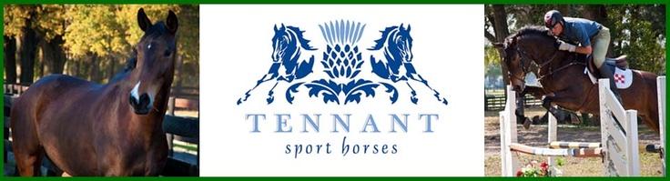 Tennant Sport Horses