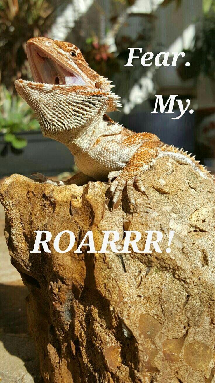 best 25 reptile cage ideas on pinterest iguana cage snake