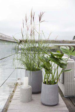 Grønne planter og prydgress er lekkert i Kragerø fiberclay potter.