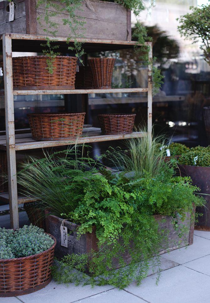 Växter för skugga I Victoria Skoglund