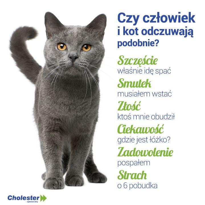 Co łączy człowieka z kotem?  #cholester #humor #zwierzeta