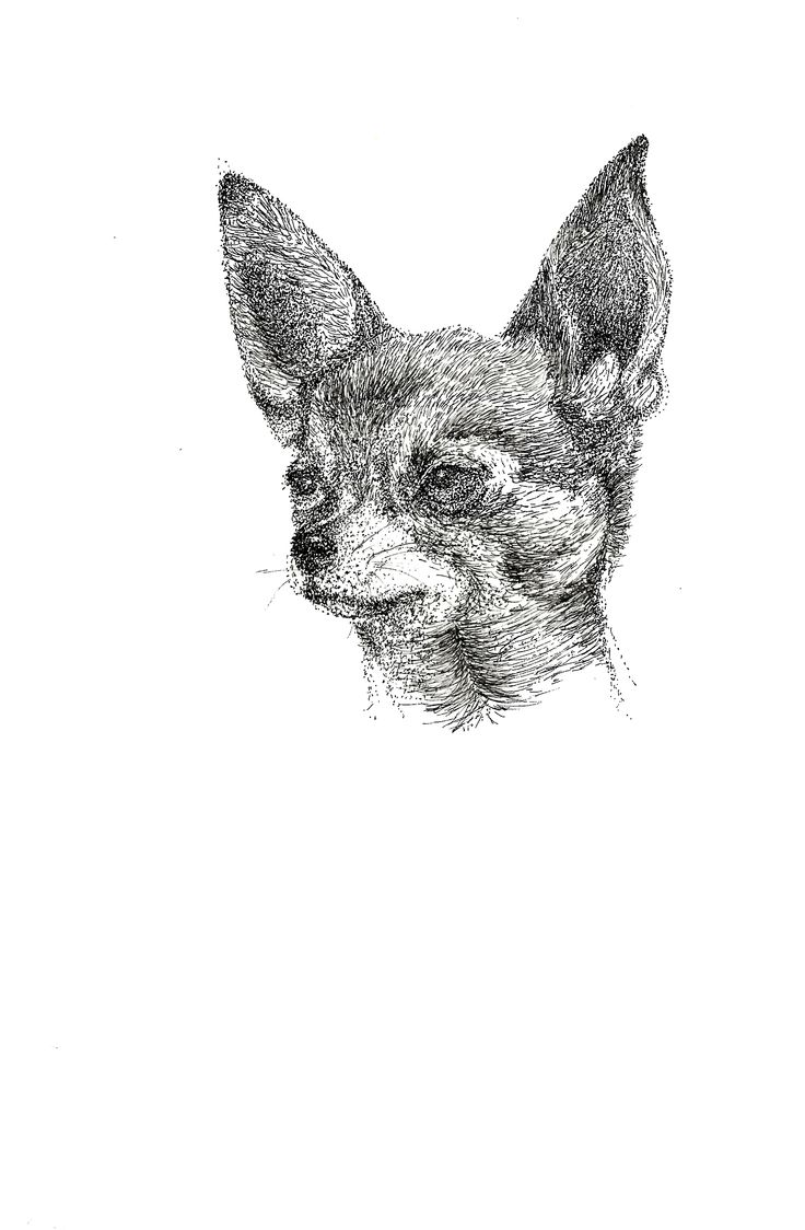 illustration (dog)
