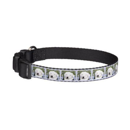 #Old English Sheepdog Pet Collar - #petcollar #petcollars #puppy #dog #dogs #pet #pets #cute #doggie #dogcollar #dogcollars