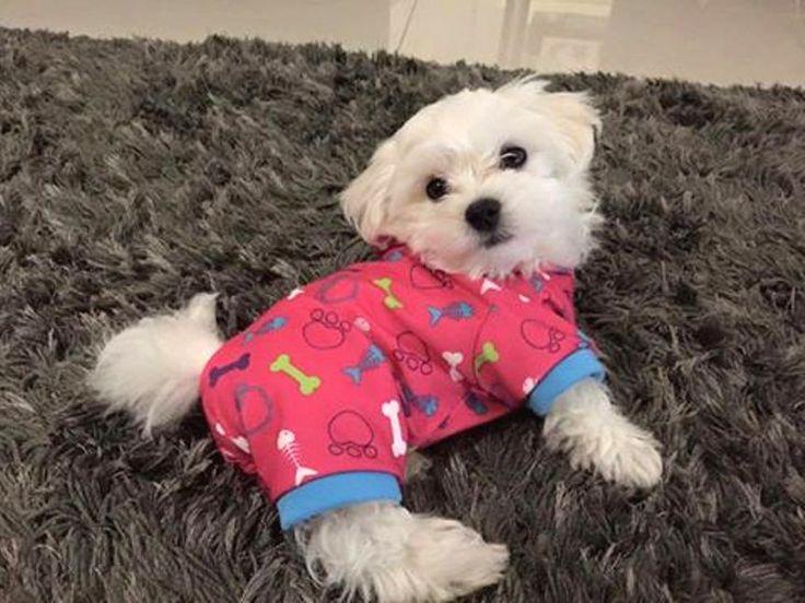 Best Dog Bed For Maltese