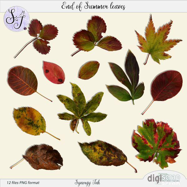 Synergy Ink   End of Summer leaves Een set van 12 herfst/einde van de zomer bladeren uit mijn tuin. Perfect om je herfstlayout te verfraaien!