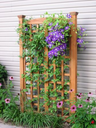 Easier and more flexible than a walkway pergola for privacy.//Trellis w/ clematis
