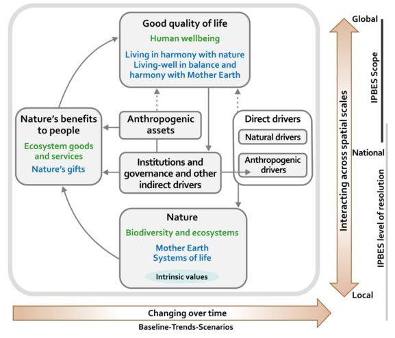004 Conceptual framework biodiversity Conceptual framework
