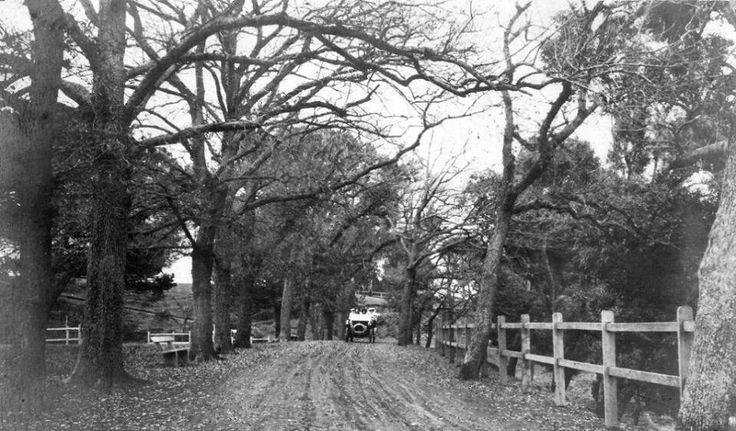 Parramatta Park in 1911.A♥W History Parramatta NSW