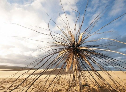 Rzeźba Corey Thomas 'regeneracji drewna' spinifex 'odsłonięty w Croajingolong Park Narodowy w Australii   Inhabitat - Zrównoważone projektowanie innowacji, Eco Architektury, Green Building