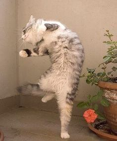 ロマサガの戦闘で自分の行動が決まった状態の猫                                                                                                                                                                                 もっと見る