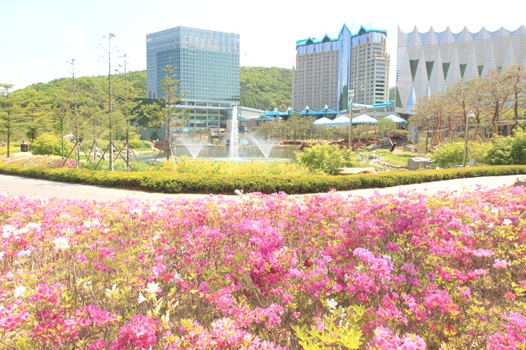 [The Spring landscape of  around Gangwon Land Hotel in Jungsun] English homepage.  http://www.high1.com/Hhome/main.high1 Korean homepage. http://www.high1.com/Hhome/main.high1 Blog.   http://blog.naver.com/high1cs FaceBook.  http://www.facebook.com/high1forcs Tweeter.  https://twitter.com/