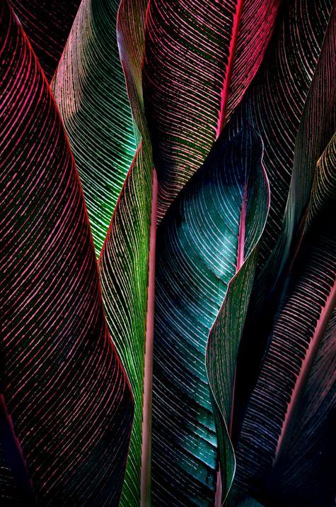 color texture  http://www.bijouxmrm.com/ https://www.facebook.com/marc.rm.161 https://www.facebook.com/Bijoux-MRM-388443807902387/ https://www.facebook.com/La-Taillerie-du-Corail-1278607718822575/ https://fr.pinterest.com/bijouxmrm/