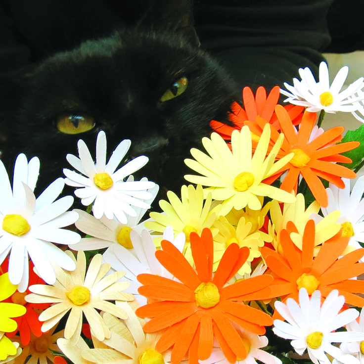 Our psychological counselor Ink likes our brand new daises - Il nostro consulente psicologico Ink apprezza le margherite appena create - #paper #flowers #flower #paperflowers #daisy #daises #handcraft #cat #cats