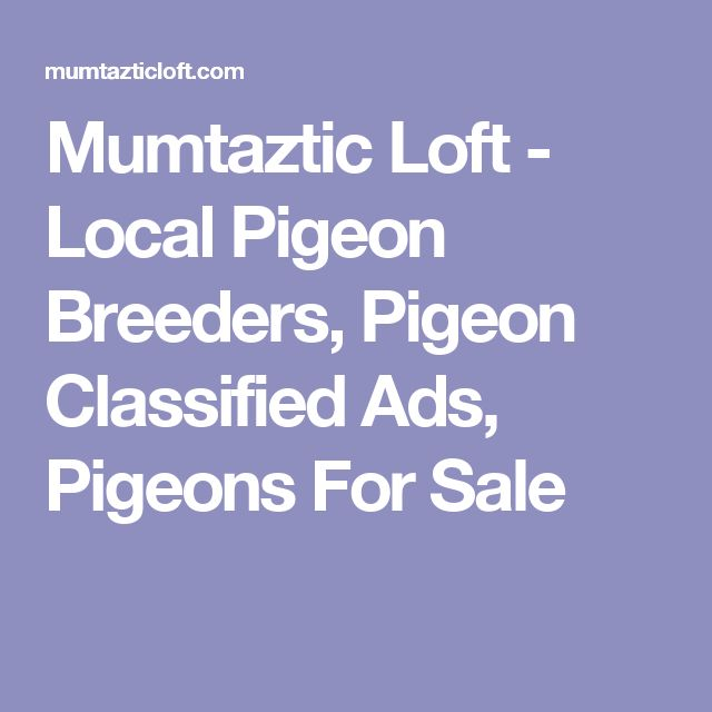 Mumtaztic Loft - Local Pigeon Breeders, Pigeon Classified Ads, Pigeons For Sale