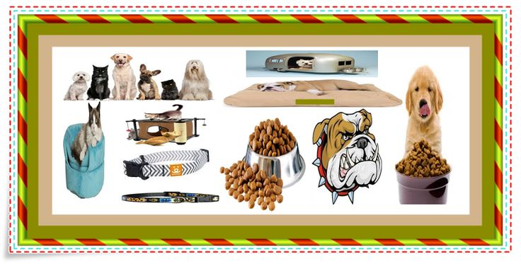 pet supplies plus, dog beds, dog food, dog collars, dog crate, dog grooming, dog grooming near me, small dogs, cat food, cat beds, cat toys, pet supplies, pet, pets