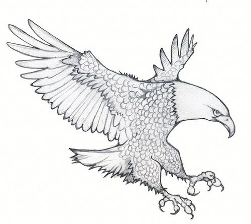 43 best Coloring for adults images on Pinterest Coloring pages - new eagles to coloring pages