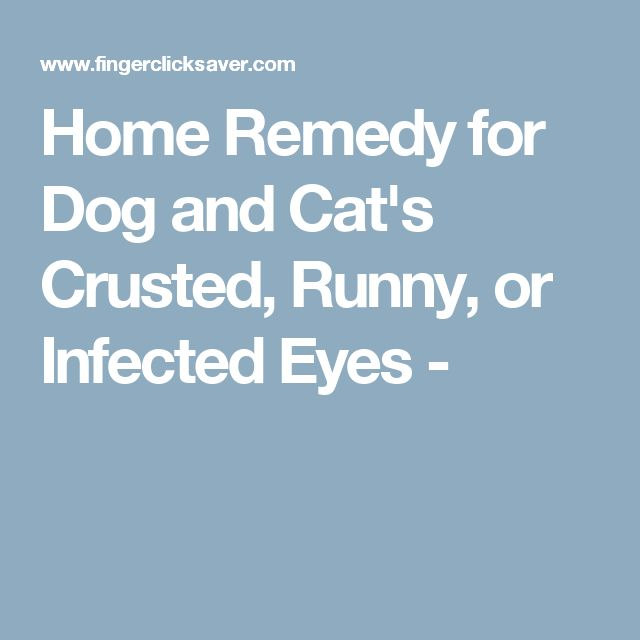 15 Best Images About Dog Treatment On Pinterest
