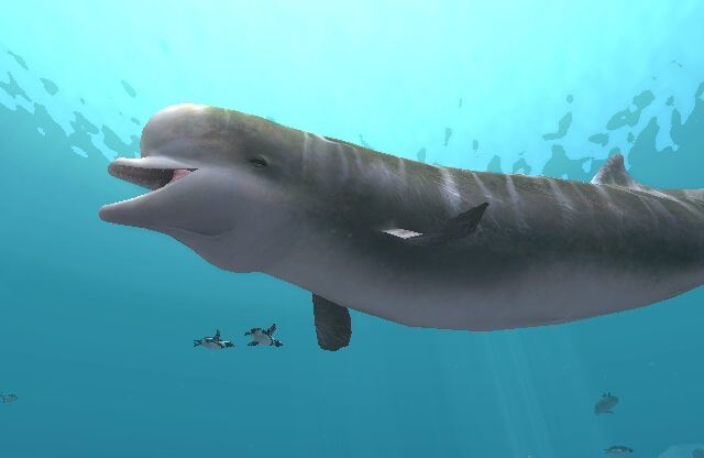 A southern bottlenose whale. #BottlenoseWhales