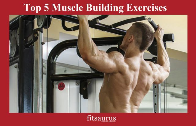 When you start your weight training journey, you should devote your time and effort to better yourself at these 5 all-essential exercises to develop a strong muscle