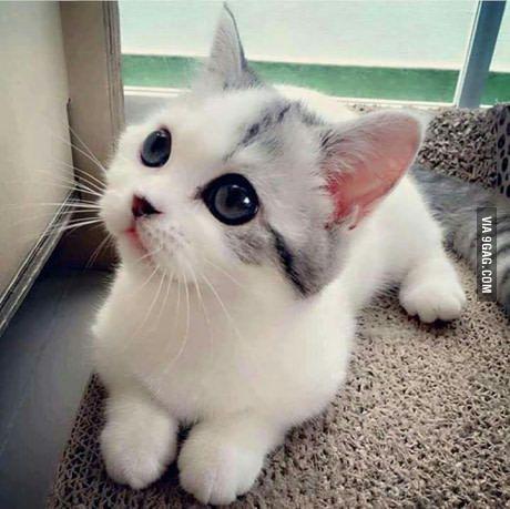Beautiful cat! More