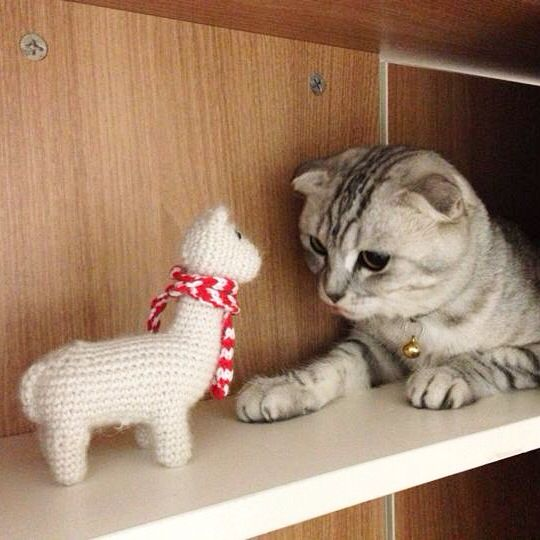 #crochet #alpaca & #cat #scotishfold In suaveperu