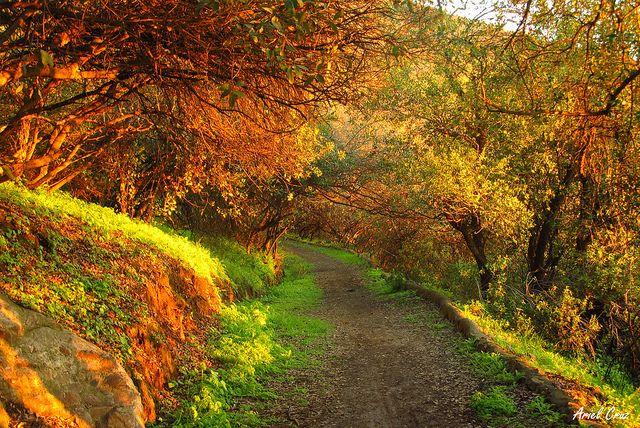 Bosque nativo el Panul, Santiago