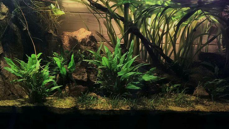 Aquarium naturel sans filtre 240L. 2x20w led