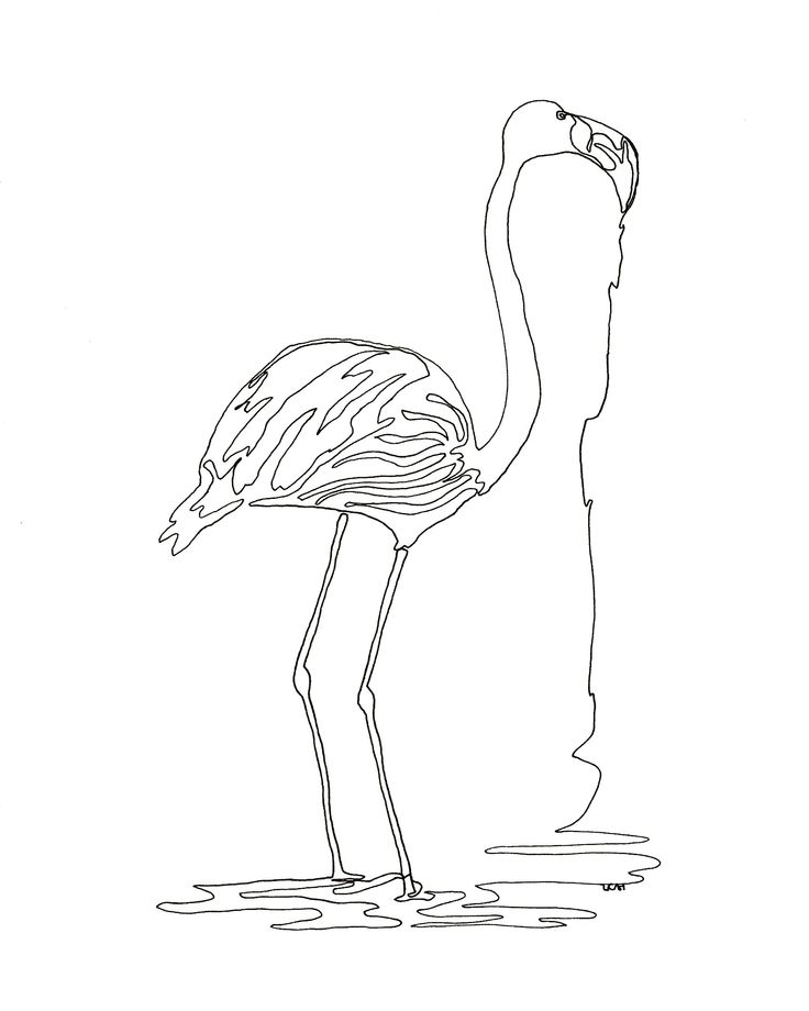 Continuous Line Drawing Of Animals : Best line drawing images on pinterest drawings