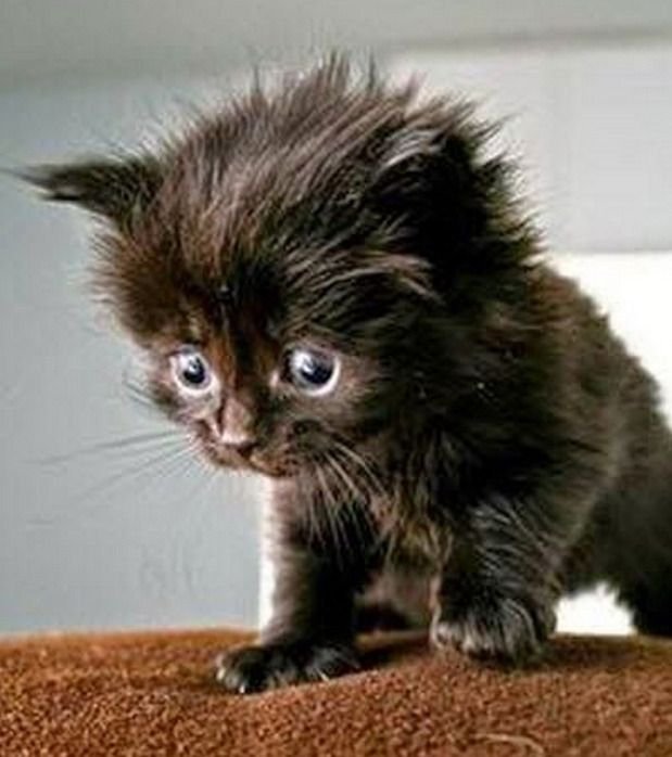 Awwwww, hello little one! Cutest little black kitten, looks as if he's just woken up! Black cats bring good luck and love.