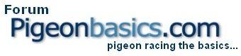 Pigeon Basics forum