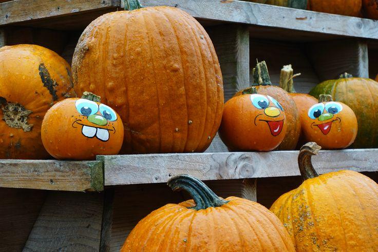 Kürbisse am Gut Clarenhof in Frechen http://www.ausflugsziele-nrw.net/gut-clarenhof-frechen/ #GutClarenhof #Frechen #Kürbis #Pumpkin #Halloween