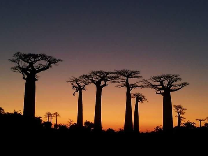 Madagascar Tours Guide & Car Rental with Driver guide - Local Tour Operator