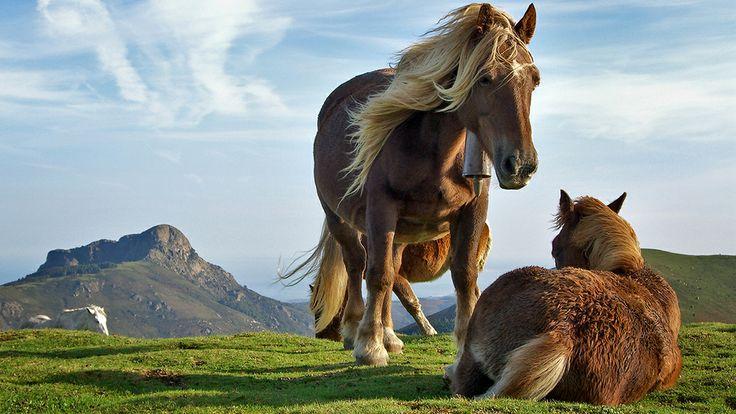حصان  Horse