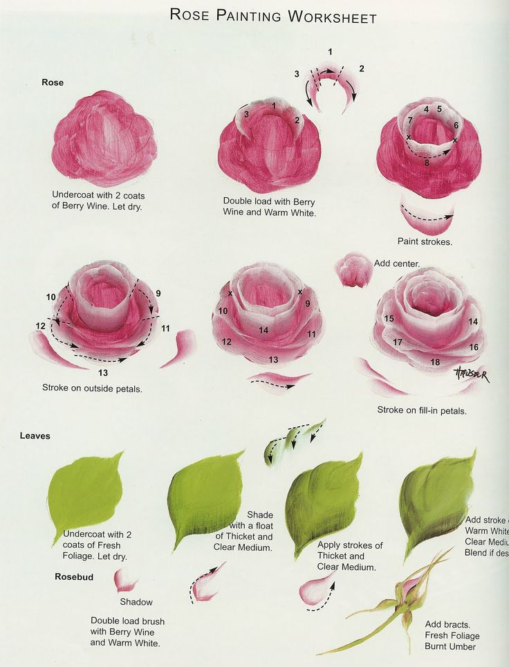 How To Paint a Rose -by Priscilla Hauser