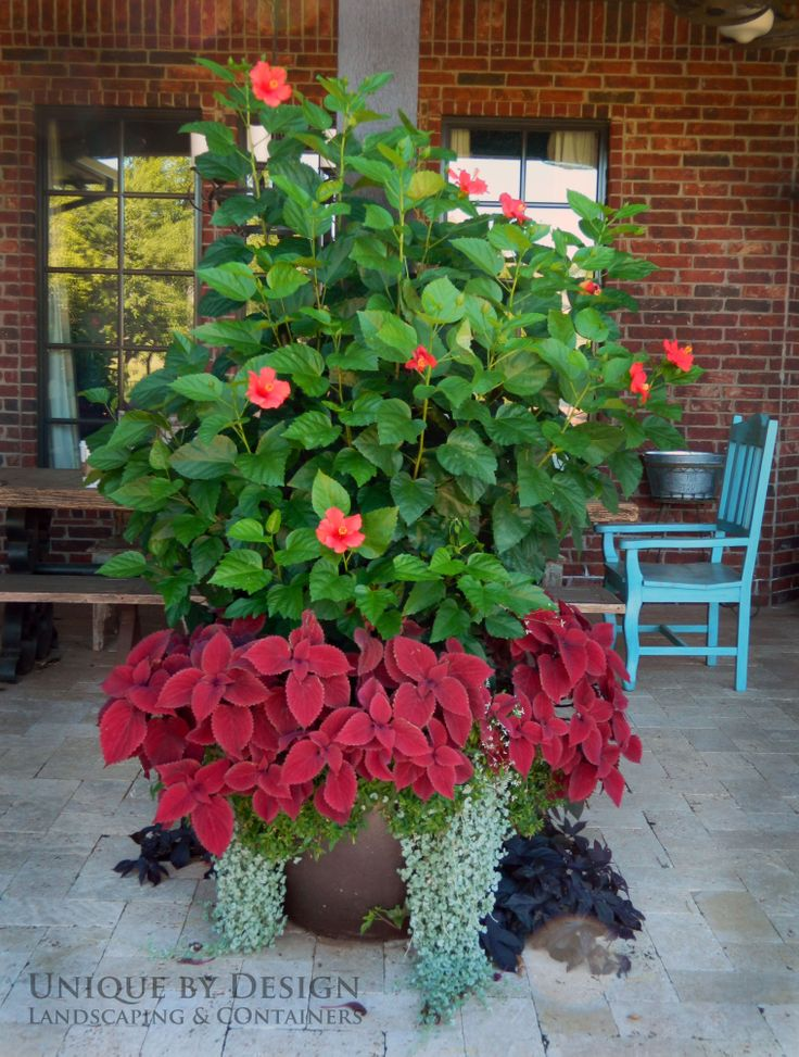 1597 best container gardening ideas images on pinterest | garden ... - Patio Container Garden Ideas