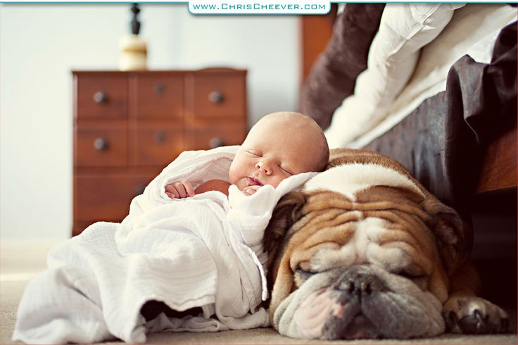 Baby posed on sleeping bulldog.